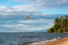 Lake Baikal Shore At Sunset Wi...