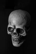 Plastic Human Skull On Black Background