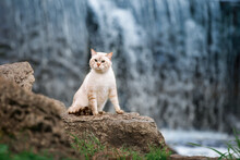 A Tabby Cat Sits On A Rock Against The Backdrop Of A Waterfall.