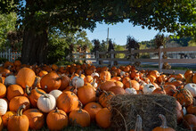A Large Amount Of Pumpkins Are...