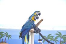 Closeup Shot Of Colorful Macaws