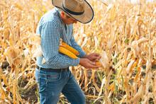 Farmer Checking Corn Field Pro...