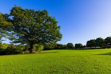 草原と大きな木