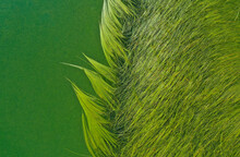 Green Seaweed Background In A ...