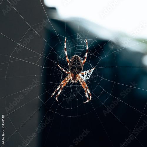 spider on web Wallpaper Mural