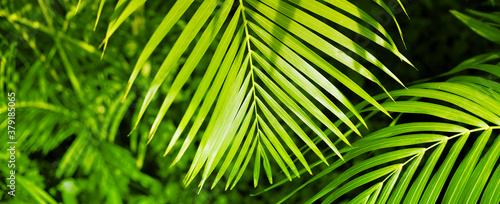 Obraz na plátně Palm leaf. Tropical plants. Nature green color background.
