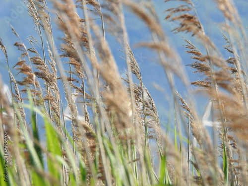 grass in the meadow #379187021