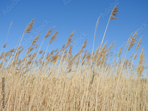 grass in the meadow #379187028