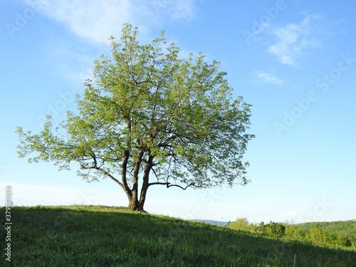green tree in a field #379187074