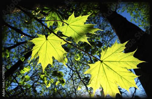 leaves of trees #379187083