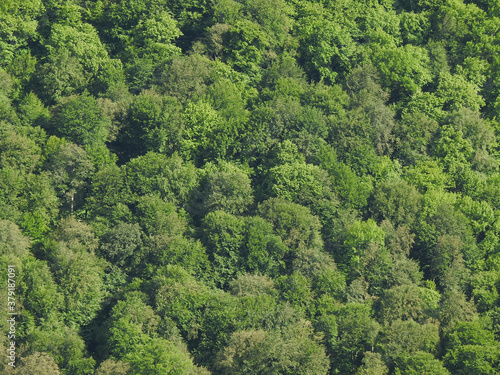 Beautiful view of green wild forest in nature #379187091