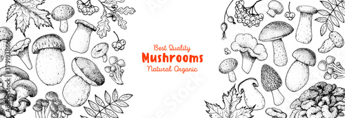 Edible mushrooms hand drawn. Autumn design. Vector illustrations collection. Hand drawn food. Sketch mushrooms. Organic food. Forest mushrooms. Engraved design.