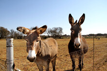 Landscape Photo Of Two Donkey ...