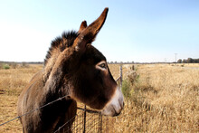 Landscape Photo Of A Donkey In...