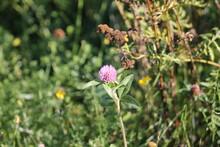 Fleur - Parc Chauveau