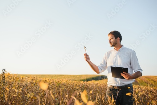 Fototapeta Agronomist inspects soybean crop in agricultural field - Agro concept - farmer in soybean plantation on farm. obraz