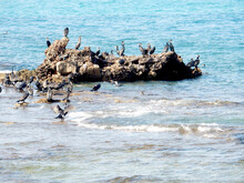 Black Sea Cormorants On The Rocks In The Sea, Selective Focus