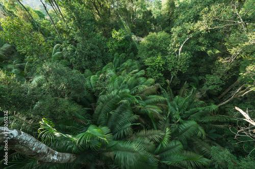 las-tropikalny-egzotyczny-liscie-paproci