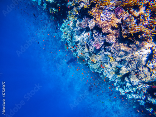 Underwater scene with coral reef in the Red Sea