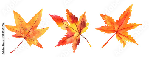 Fotografía A set of autumn watercolor maple leaves, isolated on a white background, in yell