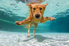 Underwater Funny Photo Of Gold...