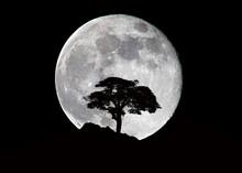 Albero Montagna E Luna Di Notte