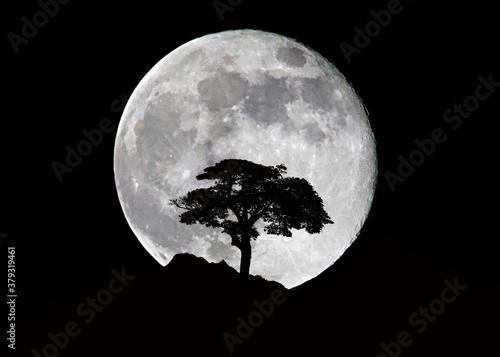 Cuadros en Lienzo albero montagna e luna di notte