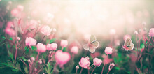 Wild Pink Flowers Bathed In Su...