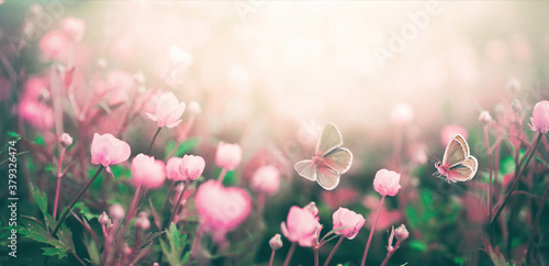 Wild pink flowers bathed in sunlight in field and two fluttering butterfly on nature outdoors, soft selective focus, close-up macro. Magic artistic image.