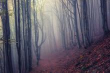 Autumn Foggy Mystical Forest, ...
