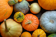 Autumn Harvest Colorful Squash...