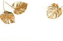 Gold Monstera Leaves Frame Isolated  On A White Background Banner. Top View. Copy Space. Floral Card.