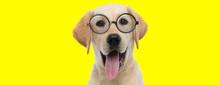 Happy Labrador Retriever Dog W...