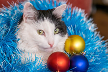 Christmas Cat. Tinsel. New Yea...