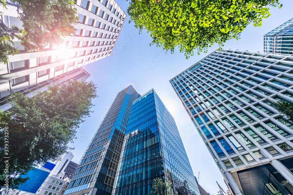 Fototapeta 新緑が綺麗な東京のビル群