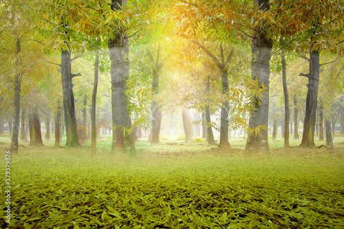 Haunted forest with fog and sunlight background - 379379876