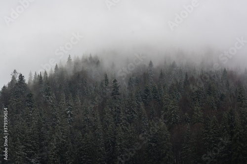 scenic fog in the mountains forest in the fall - 379390654