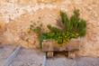 canvas print picture - Blumenschmuck, Mallorca