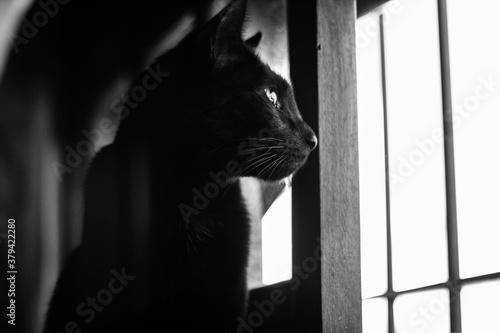 Obraz na plátně Gato Negro encerrado observando