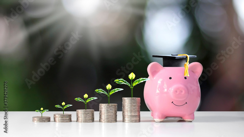 Cuadros en Lienzo Growing plant on coin pile and graduate hat placed on piggy bank on blurred green nature background education and finance concept