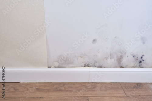 Fotografie, Obraz Black mold on the wall with wallpaper and plinth