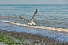 Summer Beach With Flying Away ...