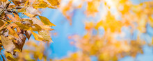 Colorful Autumn Leaves On Blue...