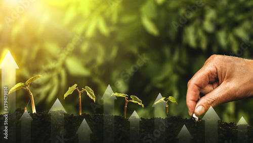 Fototapeta Hand planting seedling growing step in garden with sunshine. Concept of business growth, profit, development and success obraz