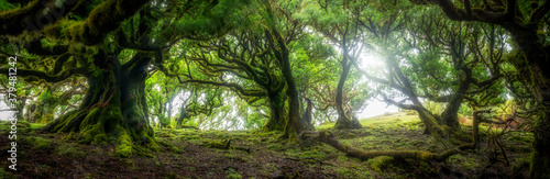 Fototapeta Beautiful sunny morning in magic forest - panorama obraz