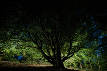 Light Painting Tree At Night, ...