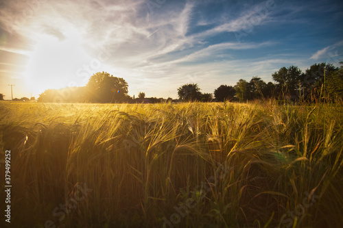 Photo agriculture yellow