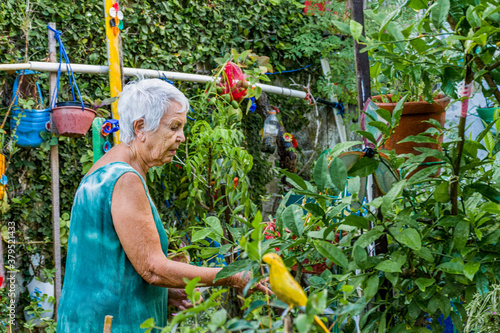 Fotografía Mulher idosa contempla e cuida do seu jardim florido
