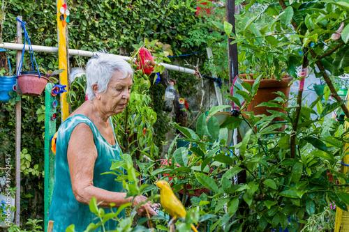 Mulher idosa cuida de molha jardim florido Fototapeta