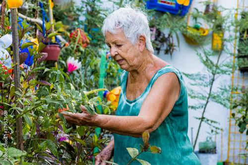 Mulher idosa contempla e cuida do seu jardim florido Canvas